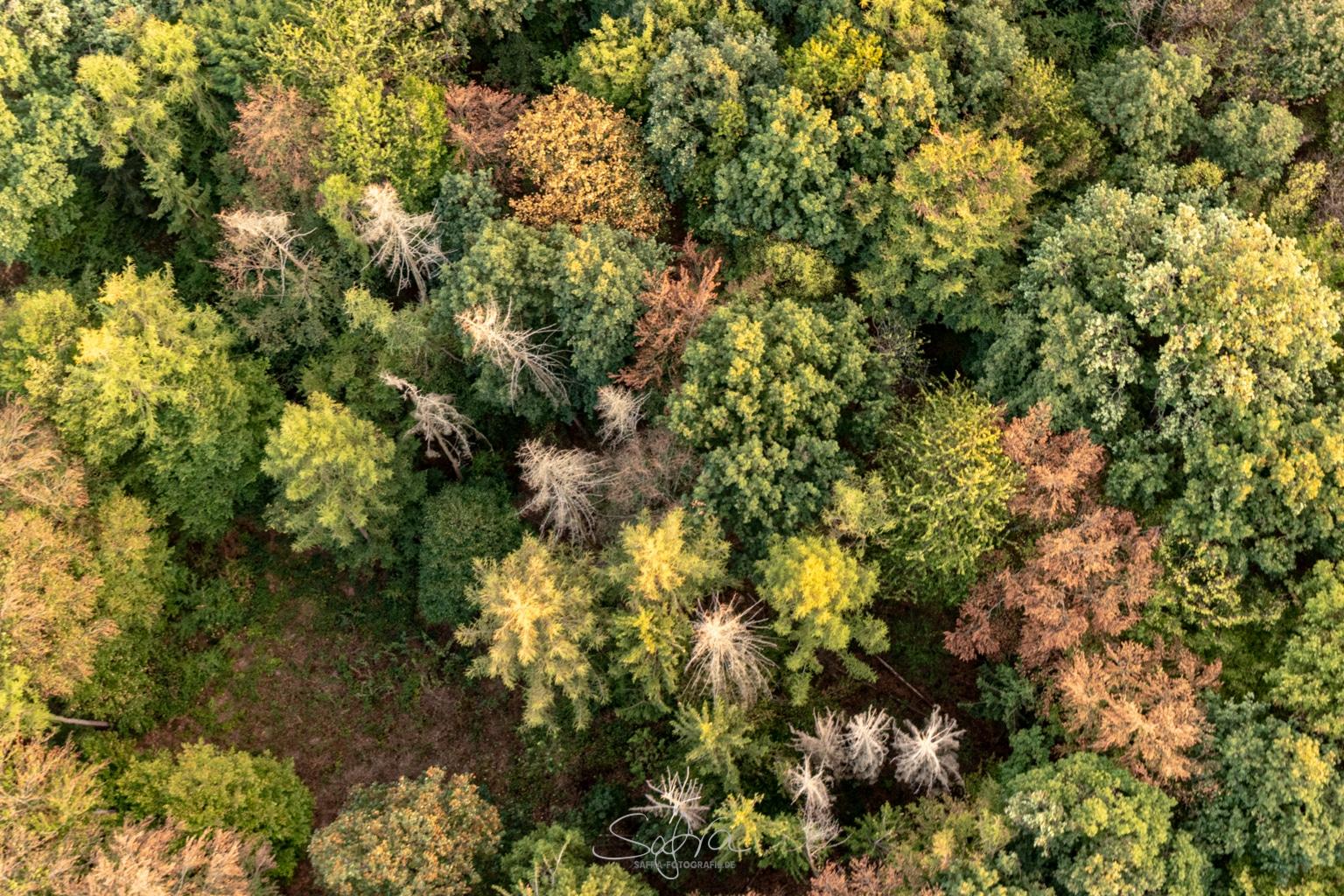 Heißluftballonfahrt, Waldsterben