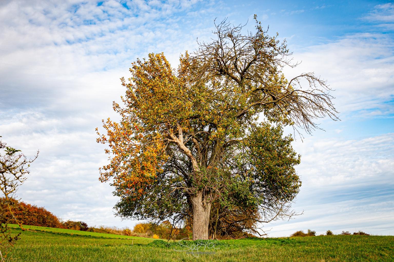 Schlierbach, Vierjahreszeitenbaum