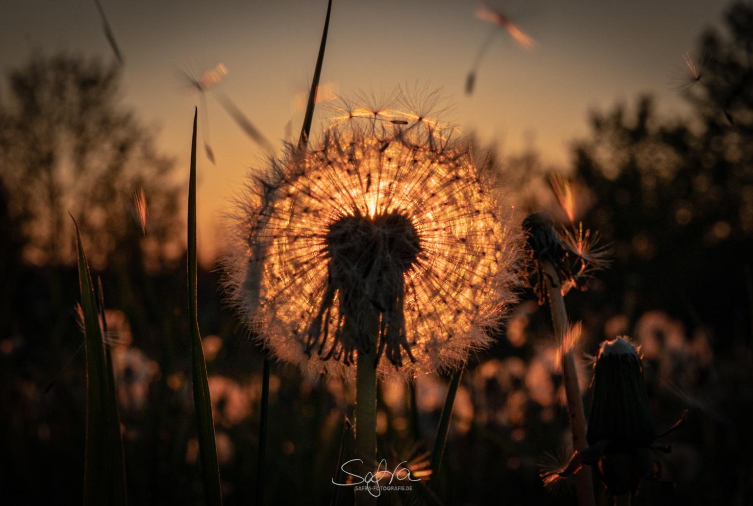 Lichtentanne, Sonnenuntergang