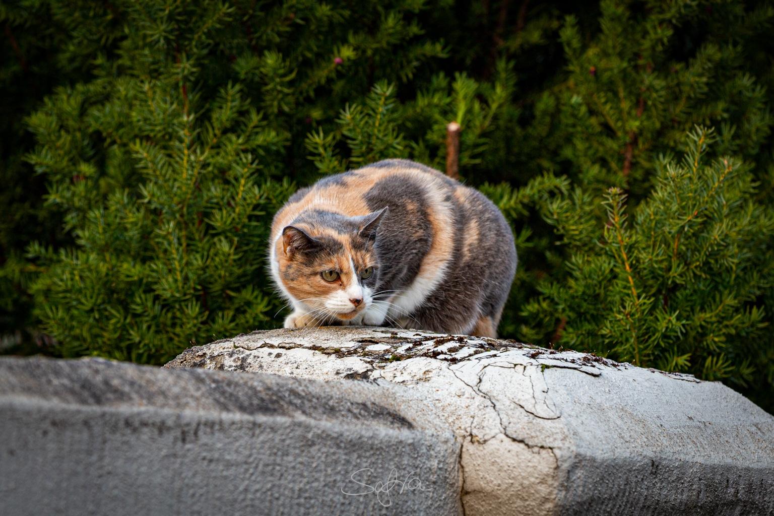 Katze in der Altstadt von Babenhausen