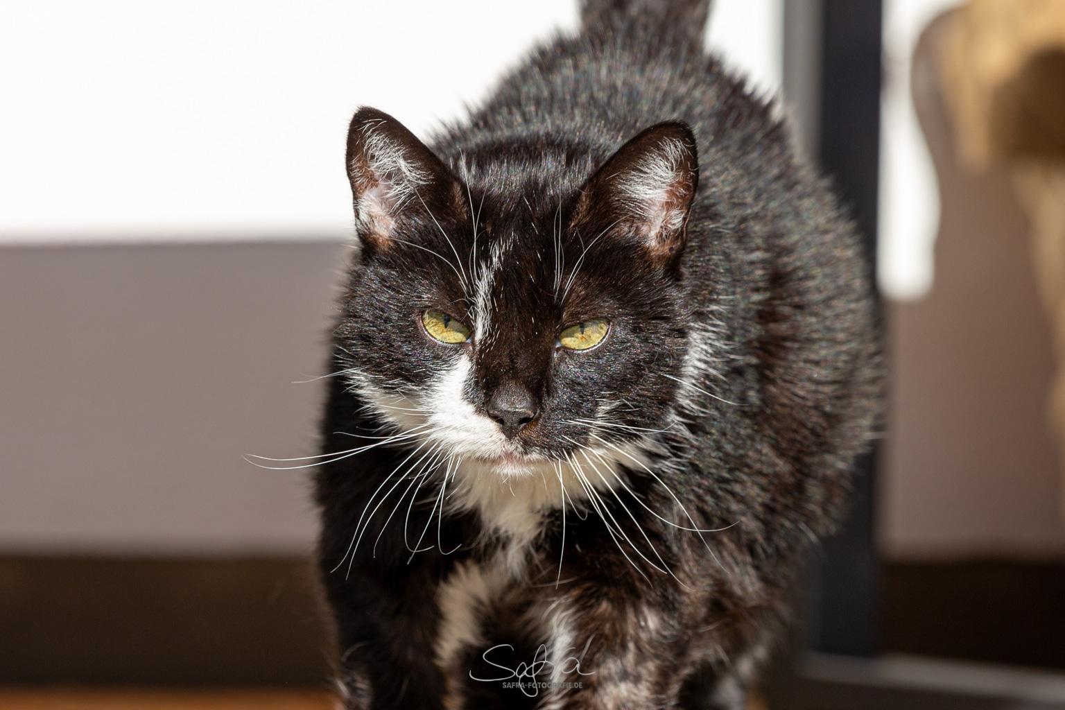 Schmidtens Katze Mittens