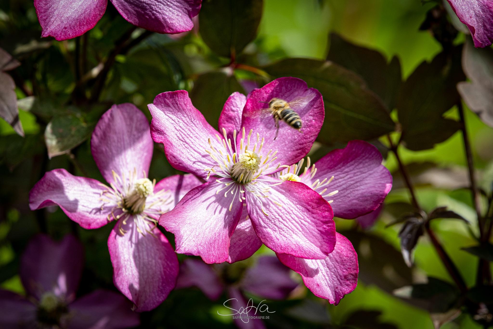 Safra-Fotografie Garten